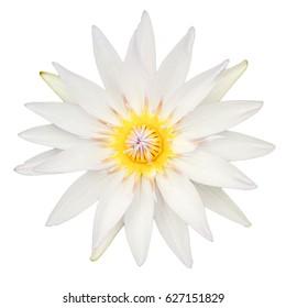 White lotus flower images stock photos vectors shutterstock top view of white lotus flower isolated on white background mightylinksfo