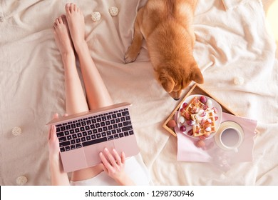 Top view of woman in bed with laptop at home, red Shiba Inu dog, cup of coffee and belgian waffles on hygge background. Ffeminine flat lay of blogger working place in Kawaii style