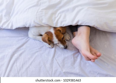 top view of woman foot on bed behind a white cover with her cute small dog besides. Daytime, pets indoors, lifestyle.