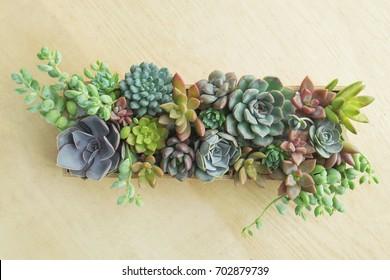 Top view of wooden box of flowering echeveria, sedum succulent plants, decoration gift idea