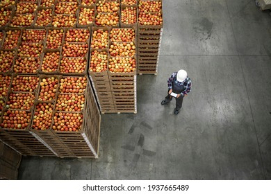Top view of worker standing by apple fruit crates in organic food factory warehouse.