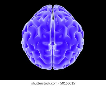 Top view of x ray brain