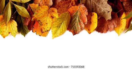 Top view of yellow foliage composed on white studio background.
