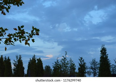 Top of young tree branches with green leaves as foreground under colourful mix big dark and white cloud with blue sky in hot humid summer afternoon for background use. Space for own text & message.