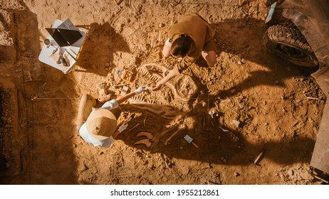 Top-Down View: Two Great Paleontologists Cleaning Newly Discovered Dinosaur Skeleton. Archeologists Discover Fossil Remains of New Species. Archeological Excavation Digging Site. - Shutterstock ID 1955212861