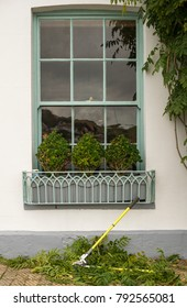 topiary box plants in pots on window sill