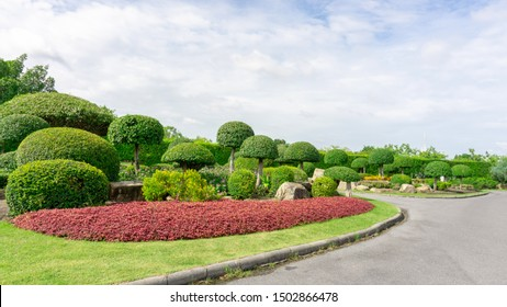 Topiary garden style, asphalt walkway in gardens with hedge round shape of bush, decorated with green wall plant, white stone on green grass lawn under cloudy blue sky in a good care landscaping