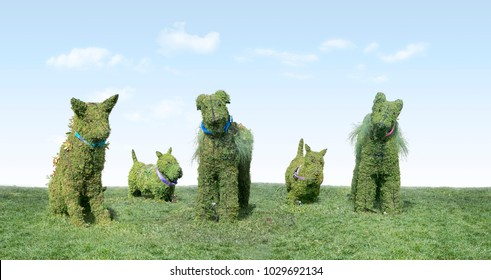 Topiary Group of Dogs on grass with copy space, located in public open space in Cupertino, CA USA.