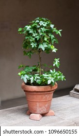 TOPIARY IN A POT WITH RISERS WHICH AID IN DRAINAGE AND AIR CIRCULATION