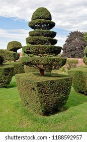 A topiary tree isolated from the other topiary tree's in the garden