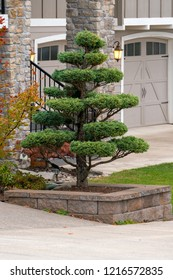 Topiary tree in raised bed retaining wall of front yard luxury home in suburban North American neighborhood