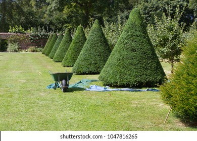 Topiary trees being trimmed in English country garden