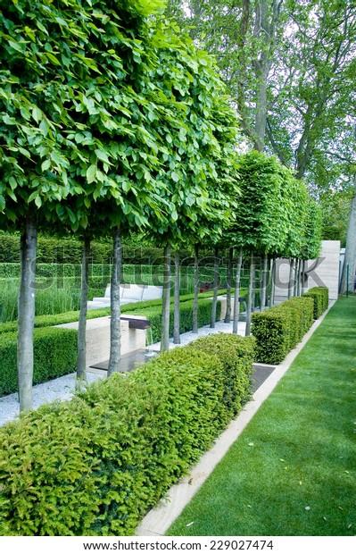 Topiary Trees Garden Fences Chelsea Garden Stock Photo Edit Now