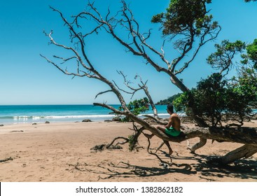 Topless man sitting on tree. Sun, sea, sand background. Detailed texture of tree bark. Blue, Green, holiday, scenic, travel concepts. Matapouri Beach, Bay of Islands, North Island, New Zealand.