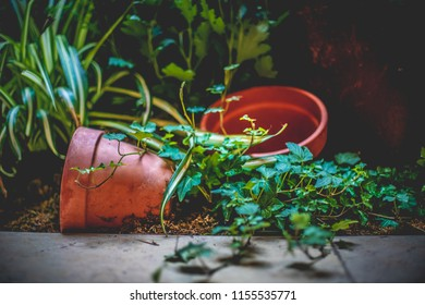 A toppled over plant pot in the dirt next to another empty pot with vines growing array.