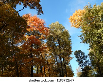 Tops of autumn trees with colorful leaves against a blue sky