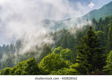 tops of mountains and trees shrouded by clouds after a summer storm
