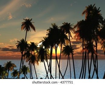 Tops of palm trees on a background of a sunset sky