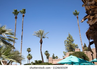Tops of palm trees and turquoise beach umbrella