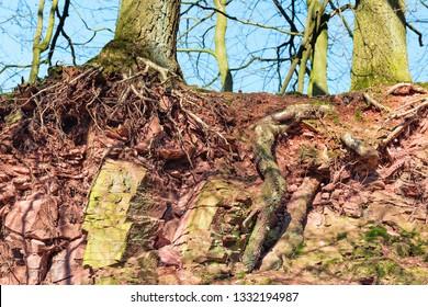 Topsoil and bedrock of an Arenosol