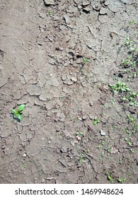The topsoil has dried and cracked, in the sun, in hot weather.