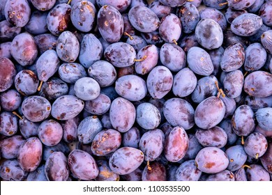 Topview background from organic Plums or damson, own garden or market