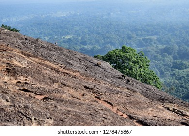 Toque macaque returing from the jungle to the safety of Pidurangala rock in the morning