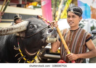 Toraja, Sulawesi Selatan / Indonesia - December 28th 2017: Toraja man holding its black buffalo fighter in Rantepao field during the lovely december event in the area.