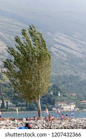 TORBOLE, ITALY - SEPTEMBER 21: wind bows tree ashore while windsurf enthusists sail on waters of touristic village on Garda lake, shot in bright fall light on sept 21, 2018 at Torbole, Italy