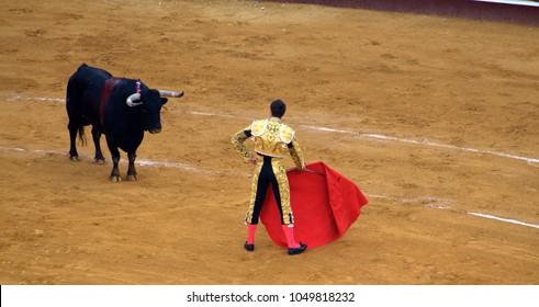 Toreador with a bull