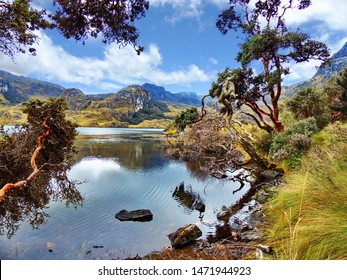 Toreadora lake (lagoon) and Paper trees or Polylepis trees at National Park El Cajas, Andean Highlands, Azuay province, Ecuador