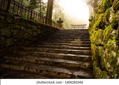 Tori in the forest, inside Nikko World Heritage, Japan