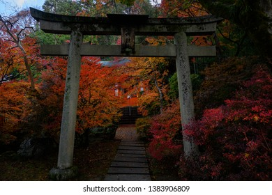 Torii gate of Bishamondo temple - one of the best spot to see red autumn foliage