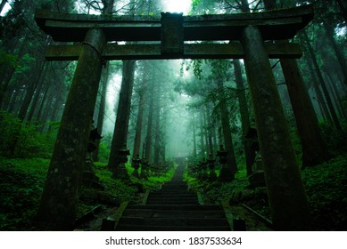 Torii surrounded by morning mist