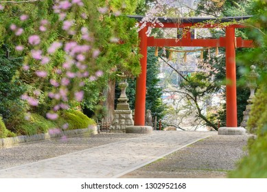 Torii, way and sakura at Osaki Hachimangu Shrine where is a Shinto Buddhist temple shrine in Sendai, Miyagi. This is Japanese architecture and style building famous nature travel landmark of Japan.