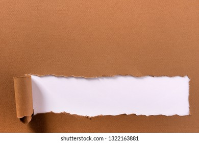 Torn brown paper long rolled bottom edge header frame white background