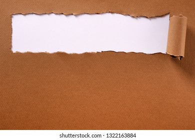 Torn brown paper long rolled edge header frame white background