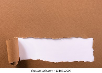 Torn brown paper strip white background curled edge