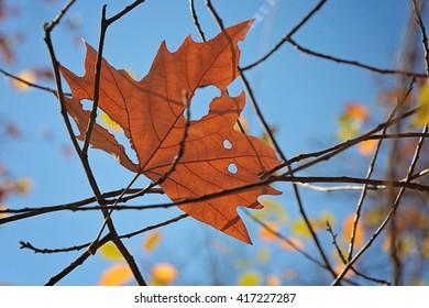 Torn leaf against a blue sky