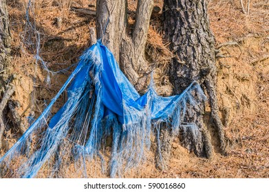 Torn and ragged blue tarp hanging from the roots of trees in a woodland area