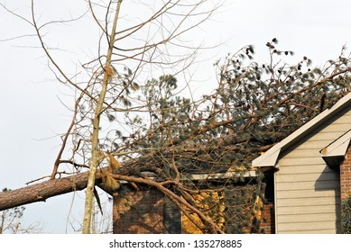 tornado damaged house with a fallen pine tree on the rooftop.