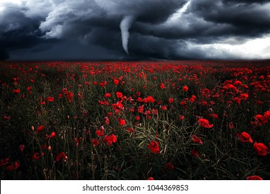 Tornado over poppy field