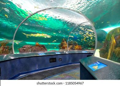 Toronto Aquarium underwater scenic tunnels