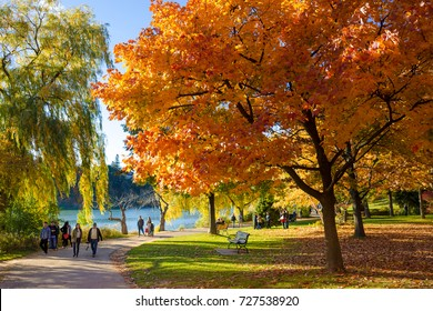TORONTO, CANADA - OCTOBER 27, 2016:  Colourful Canadian Autumn in High Park. High Park is a municipal park in Toronto, Ontario. It spans 161 hectares, and is a mixed recreational and natural park.