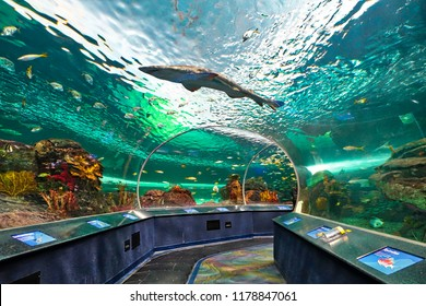 Toronto, Canada-26 August, 2018: Ripleys Aquarium underwater scenic tunnels