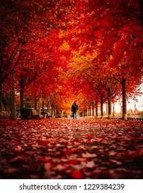 TORONTO FALL/AUTUMN SCENE - Man walking down incredible tunnel of beautiful red and golden trees. Rare, stunning scene of autumn color in urban park setting. Toronto, Ontario, Canada