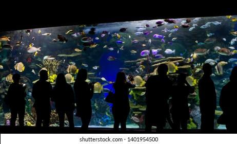 Toronto, Ontario, Canada - September, 2018: Ripley's Aquarium, people enjoying the tropical fishes in the tank