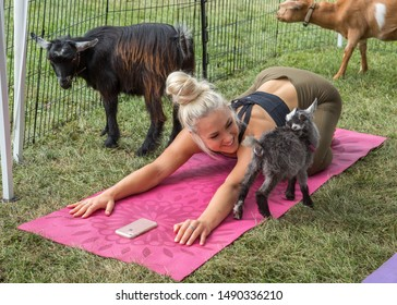 Toronto, Ontario/Canada - May 16, 2018: Goat yoga is a growing and popular discipline where baby goats have free rein to come and interact with participants during practice.