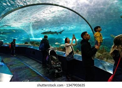 TORONTO ONTARIO/CANADA NOVEMBER 15 2018 A man holds his son up to see the sand tiger shark inside the shark tunnel Ripley's Aquarium of Canada, Toronto, Ontario