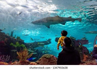 TORONTO ONTARIO/CANADA NOVEMBER 15 2018 A man holds his son up to see the sand tiger shark inside Ripley's Aquarium of Canada, Toronto, Ontario